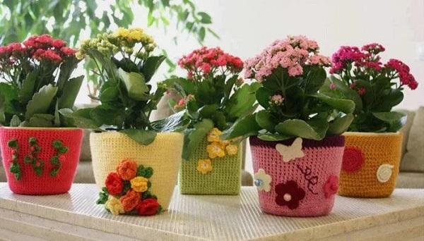 комнатные цветы бизнес