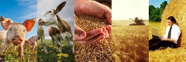 Сельхоз бизнес идеи – перспективы и выгодные предложения