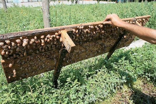 Сельхоз бизнес идеи