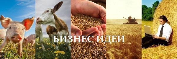 бизнес в сельском хозяйстве идеи
