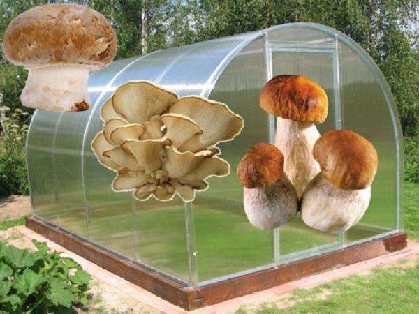 Выращивание грибов как бизнес – виды, секреты, отзывы
