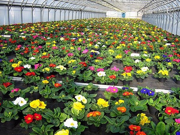 Выращивание как бизнес