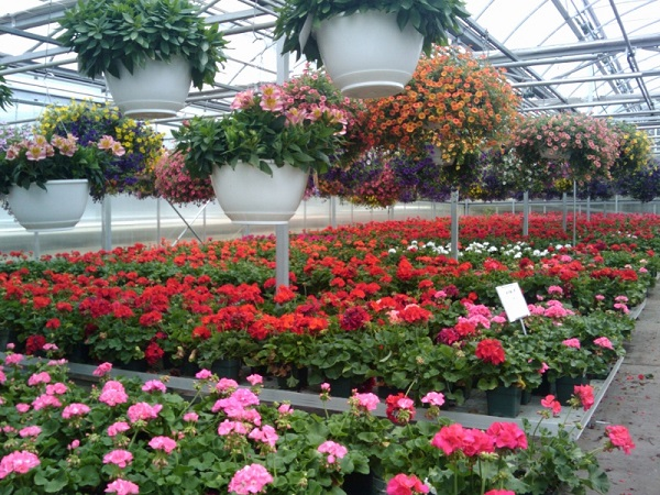 бизнес на цветах выращивание