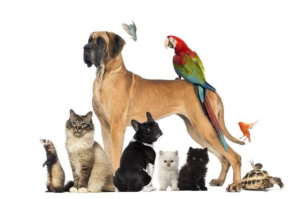 Домашние животные как бизнес: идеи, особенности, рентабельность
