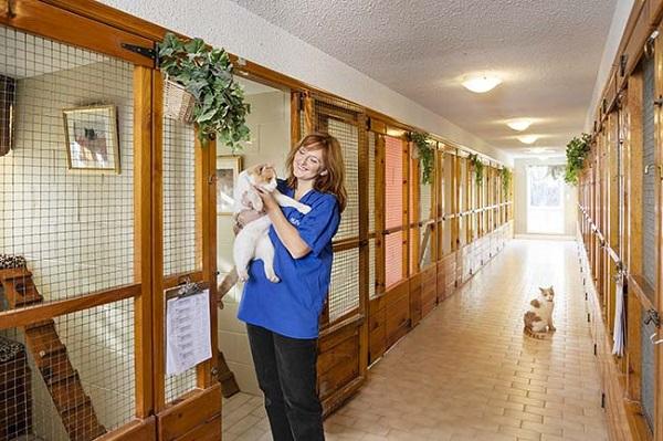 бизнес гостиница для животных